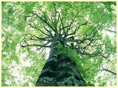 Árvore do Mundo